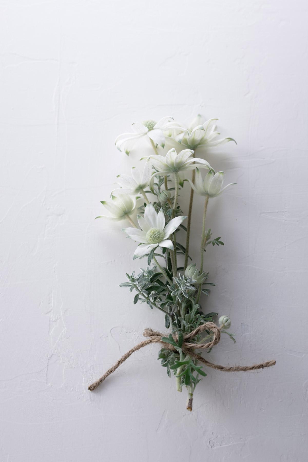 フランネルフラワーの花束