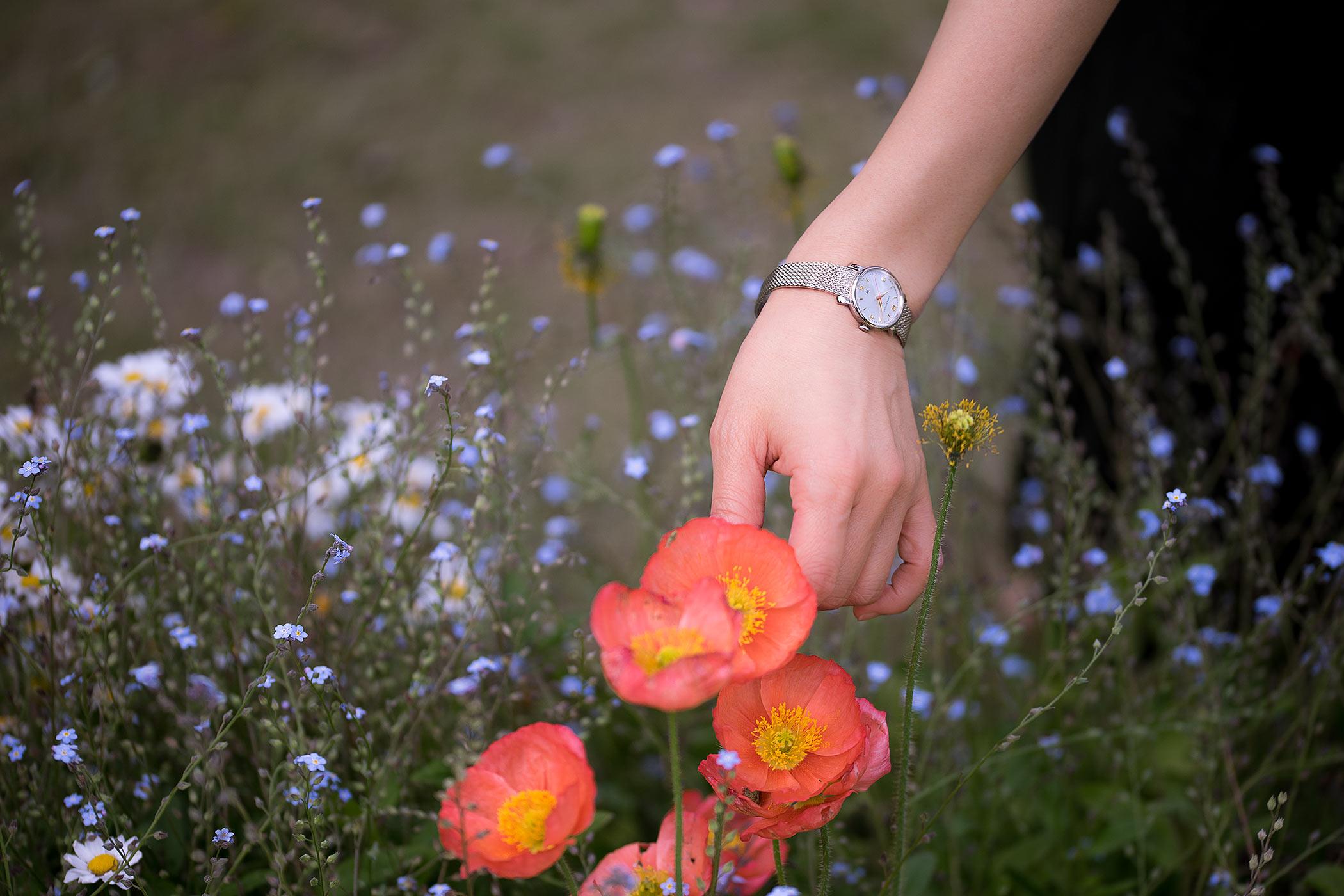 春の花畑で女性が緋色のポピーを摘む